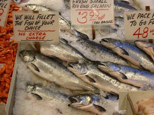 Fish Farming (14)