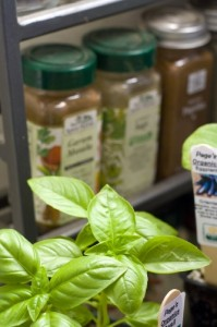 Worthwhile to Grow your Own Basil?