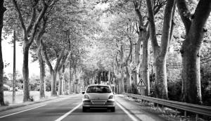 Car in Tree Lane
