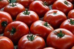 $64 Tomato (48)