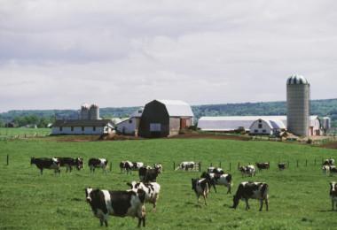 Diary Farm