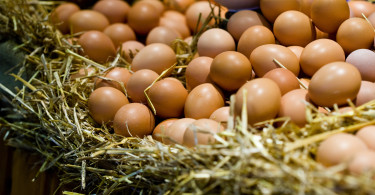 Farm Eggs (Large)