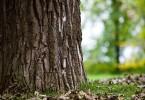 Oak Tree Base 1