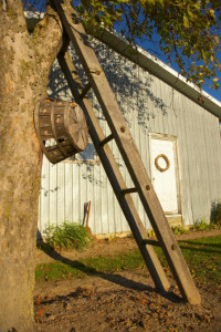 Orchard Farm Ladder
