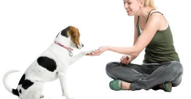 Women Shaking Dogs Paw
