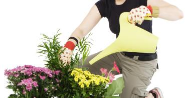 Women Watering Plants