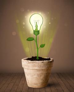 Lightbulb Changing or Planting